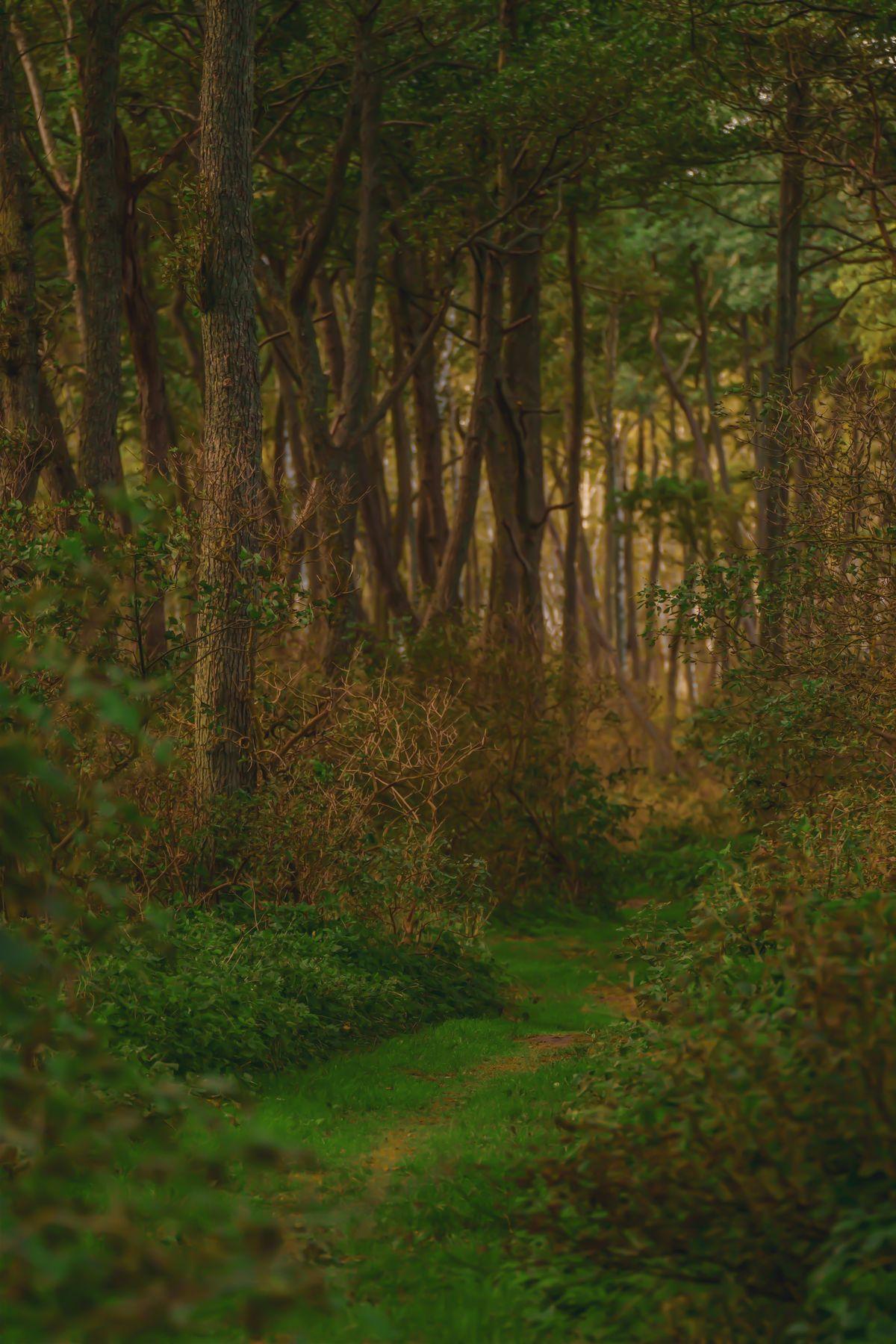 Таинственный лес лес куршская коса тропа