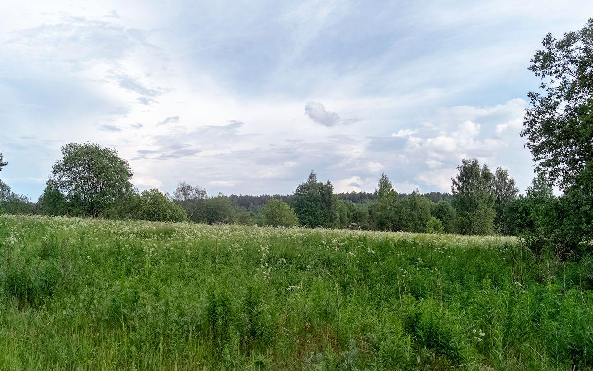 Урочище Курилово курилово коткишево нея природа пейзаж деревня урочище лето путешествие