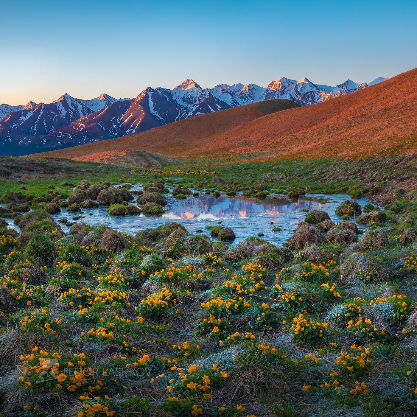 Весенний пейзаж на рассвете Кавказ Теберда Эльбрус Кавказский хребет весна путешествие горы горное озеро озерцо цветение альпийские луга калужница многолепестковая рассвет цветущее жёлтый на фоне гор цветы весеннее