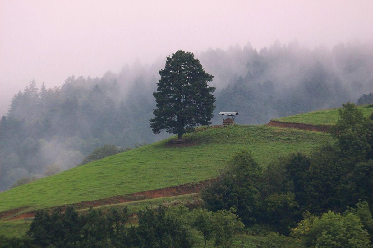 Одинокое . дерево туман одиночество