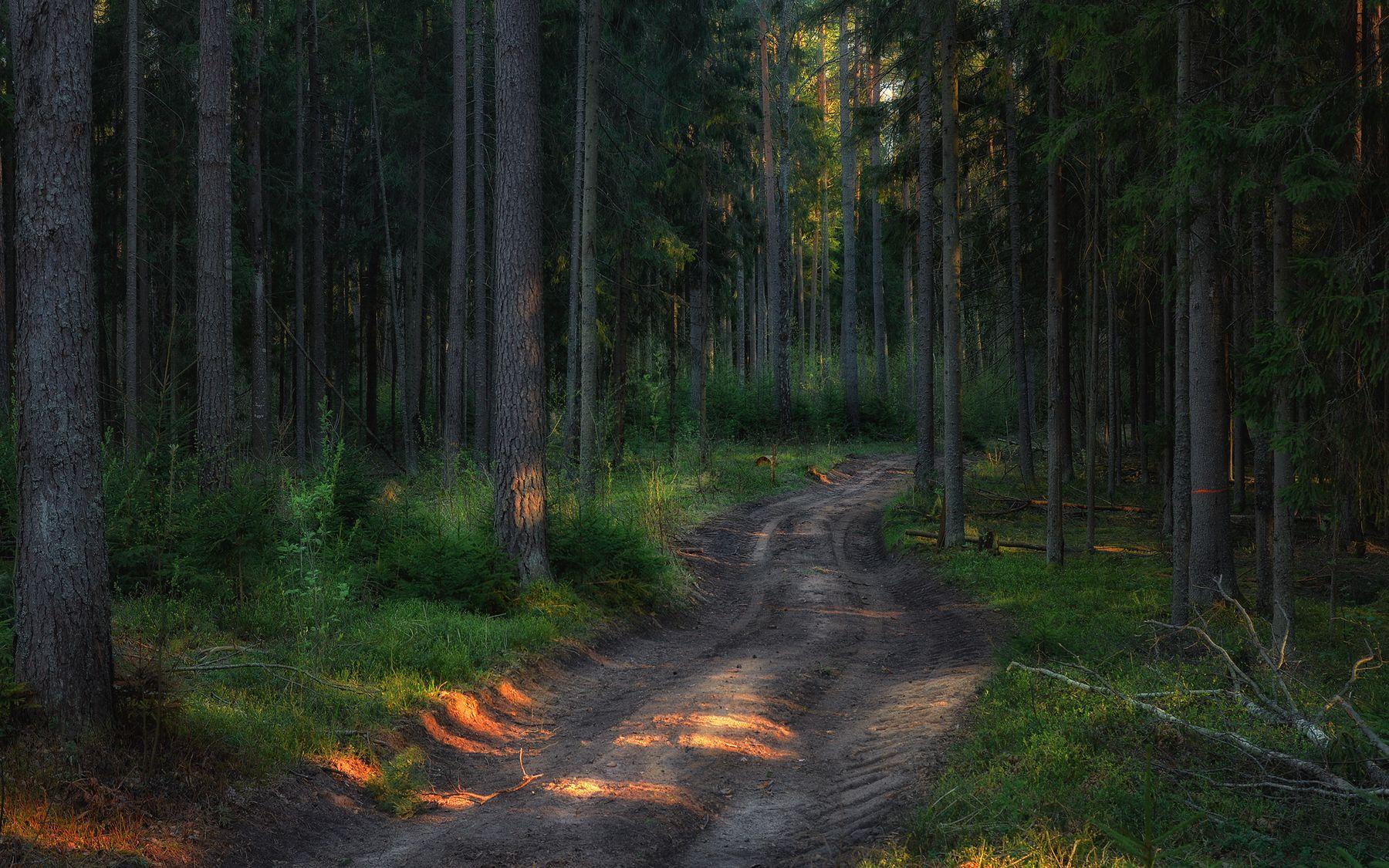 Дорога сквозь лес