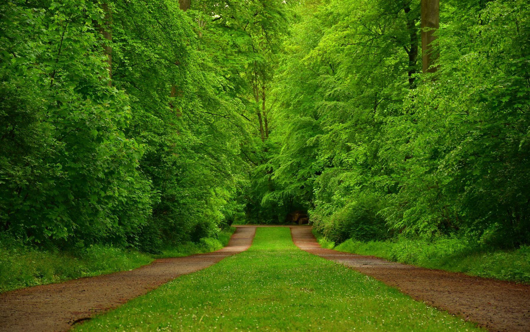 Зеленый шум! весна лес зелень листва дорожки