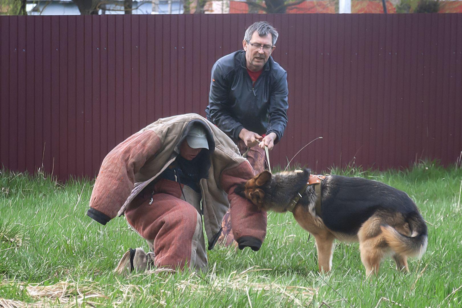 ЗКС (Защитно-караульная служба). зкс nikon d3000 собаки фигурант