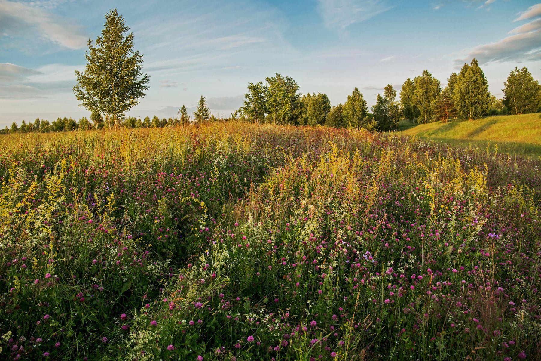 Летний пейзаж природа пейзаж лето татарстан дубровка луг