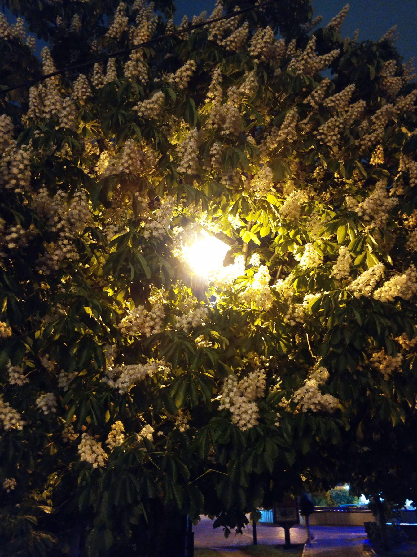 Ночь, улица, фонарь, каштан Город парк природа тмобильное