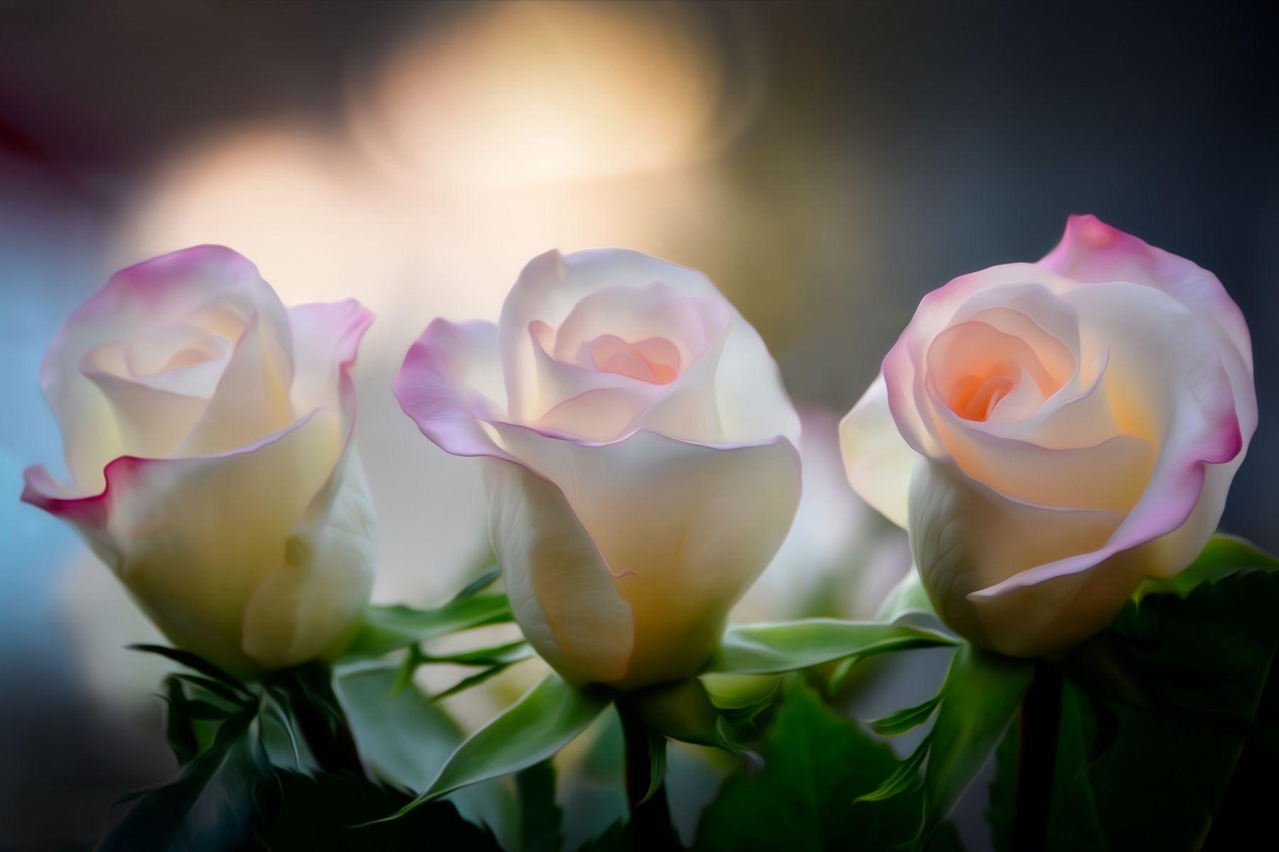 Три подруги Розы
