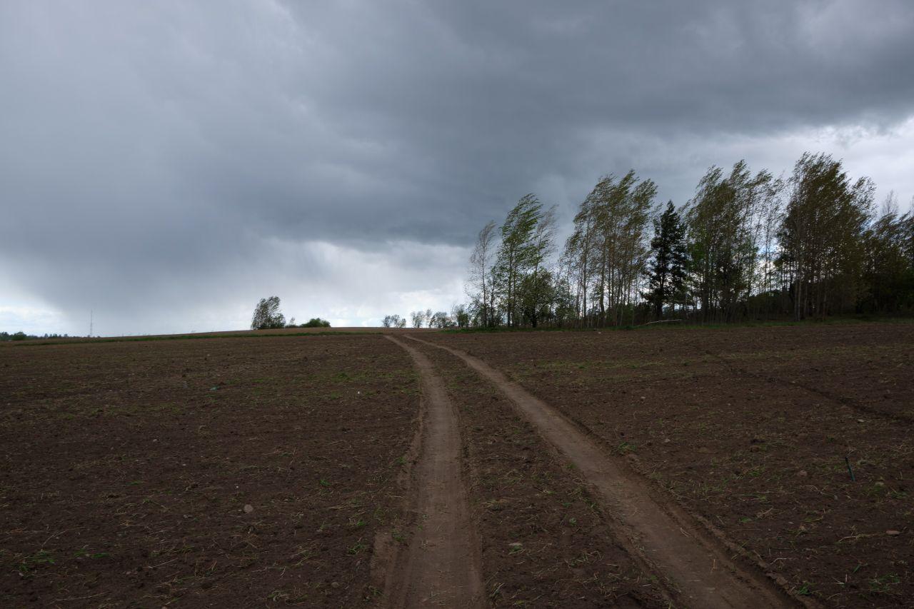 Ветер в поле поле ветер облака деревья