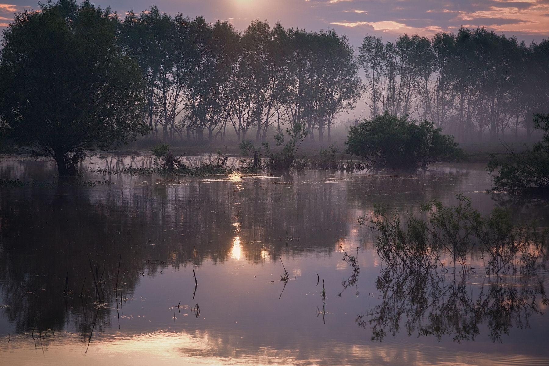 Утренние зарисовки природа туман лето рассвет