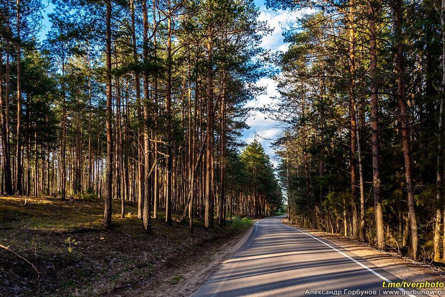 Загородная дорога сосны лес весна вечер