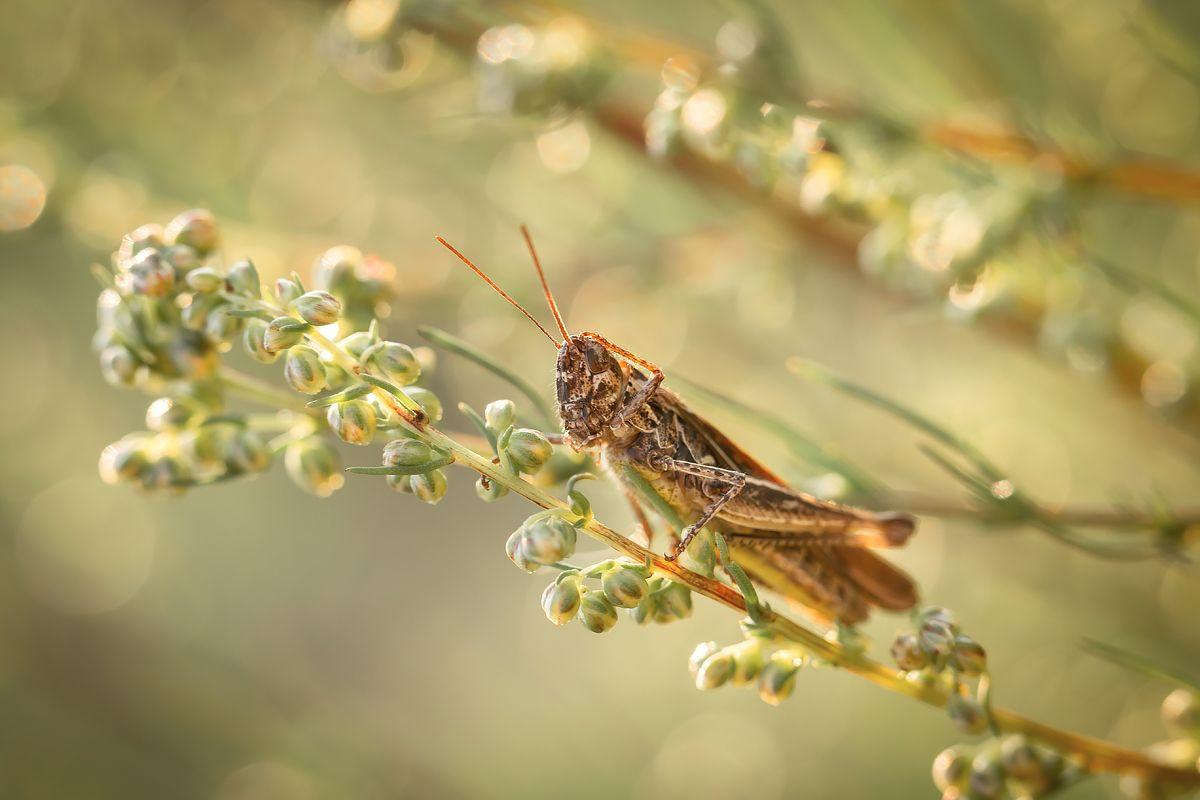 Задумался... природа крупным планом насекомые