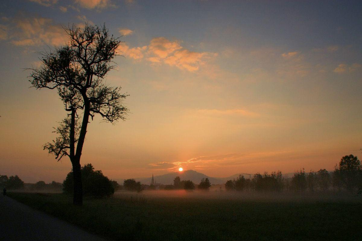 Просыпалось красно солнышко Утро дерево рассвет