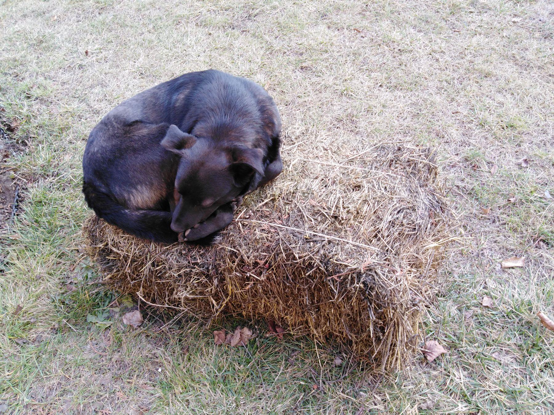 Собака на сене собака сено осень город