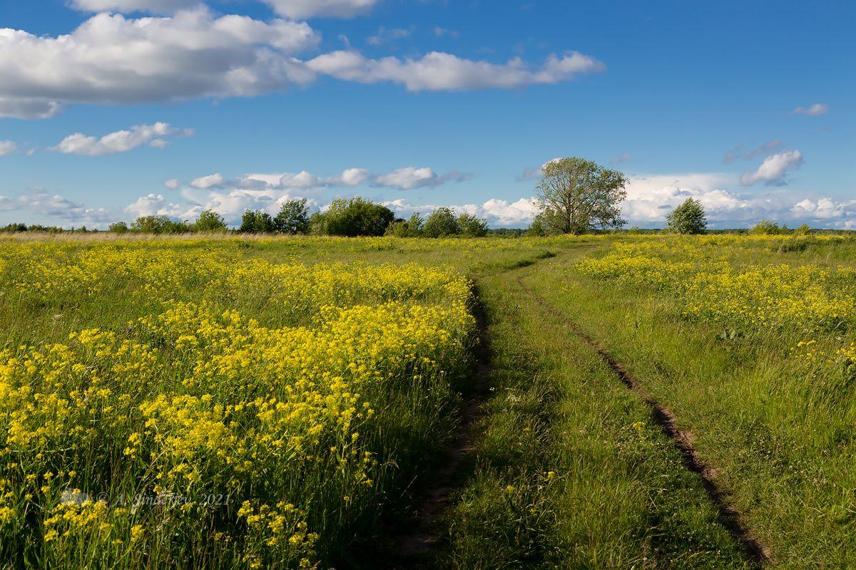 Цветение в лугах летний пейзаж луговые цветы