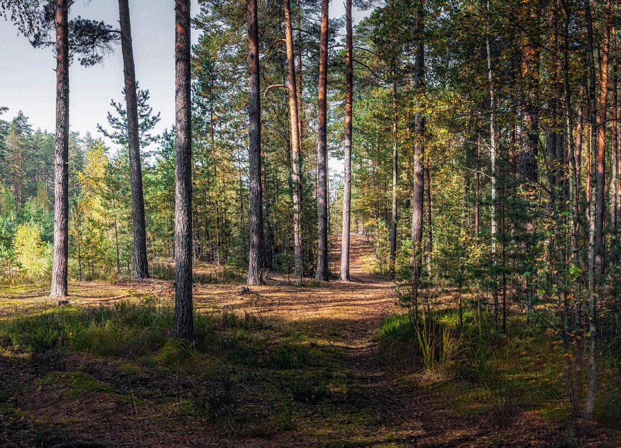 ***Утро в осеннем лесу.
