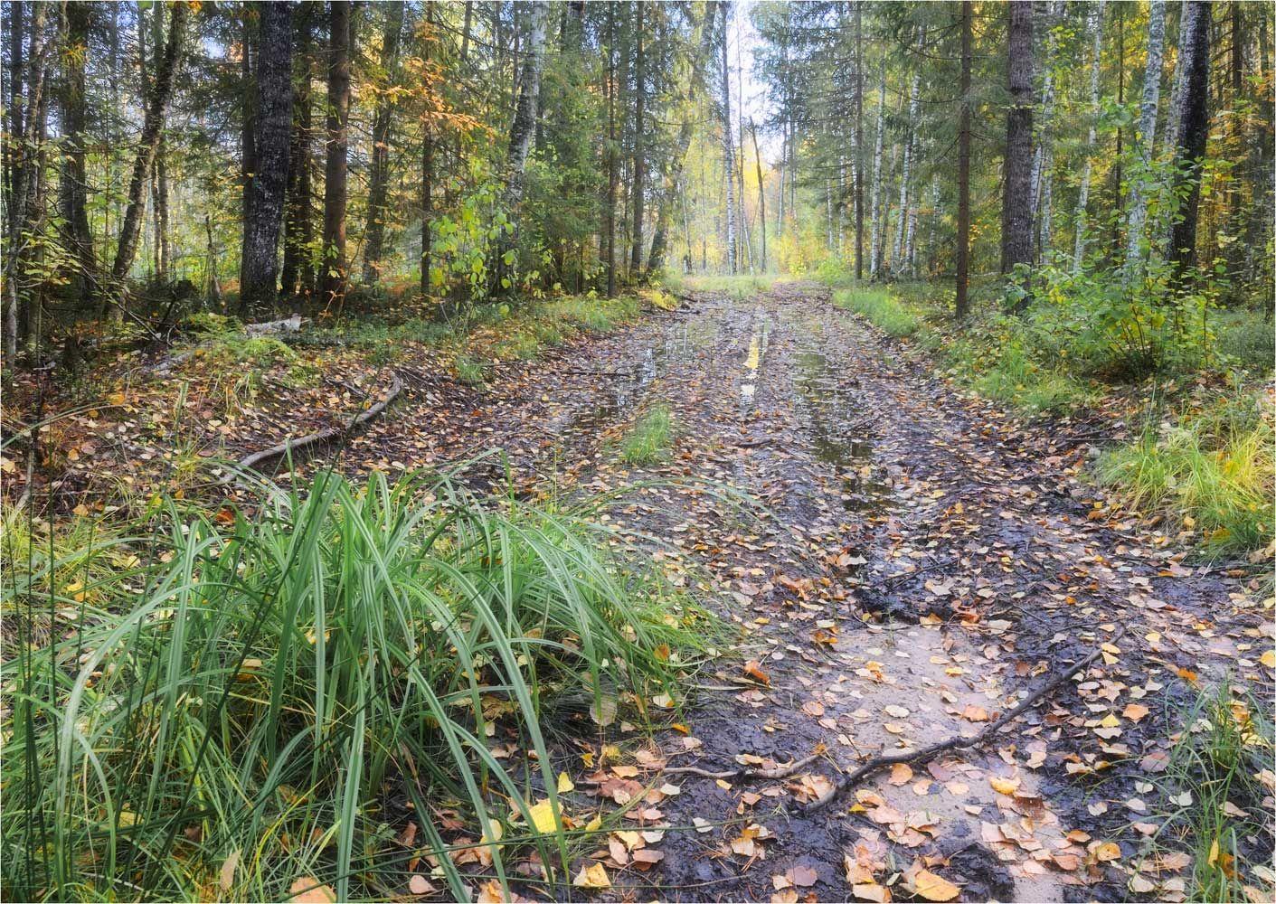 По сентябрьскому лесу