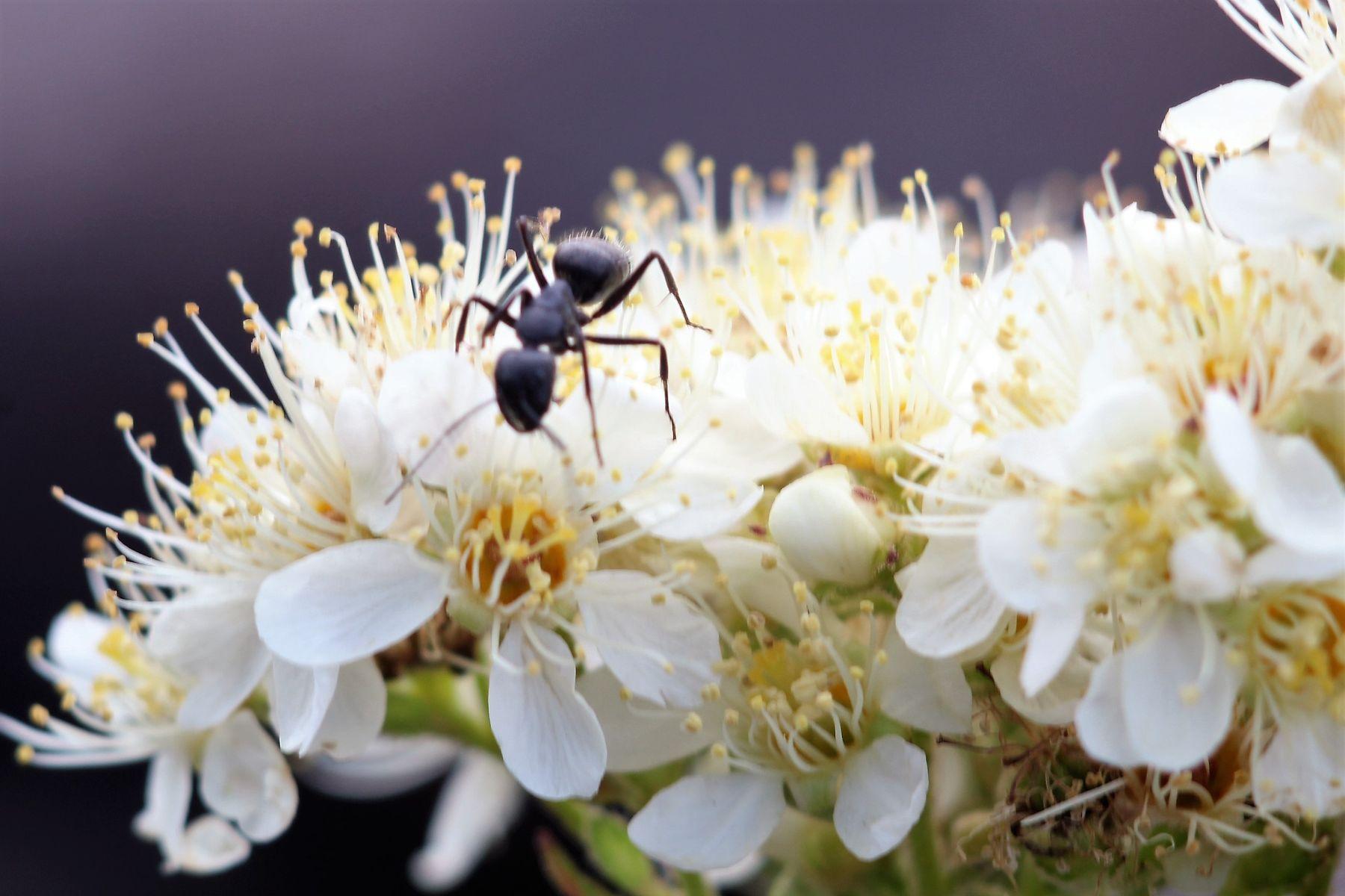 муравьишка природа лето насекомые жара красота