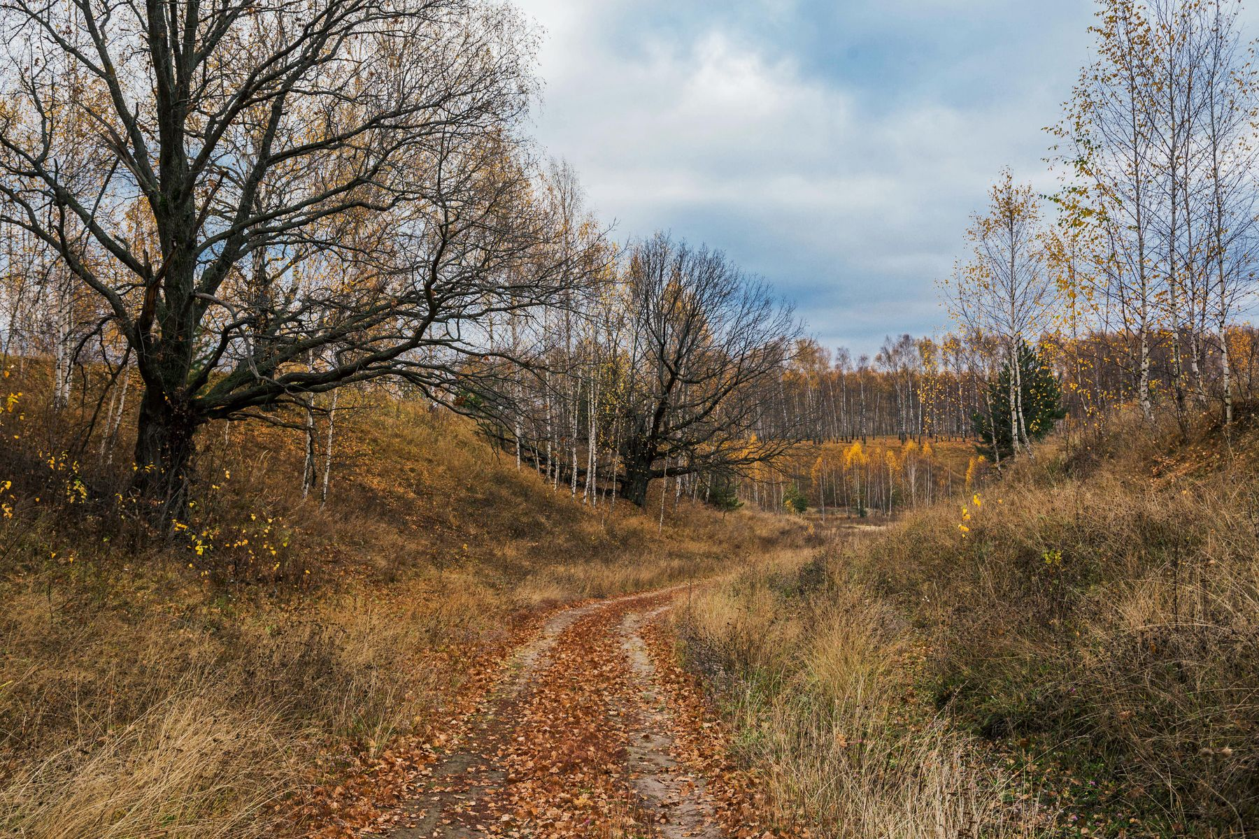 *** природа пейзаж осень дорога татарстан новочувашский