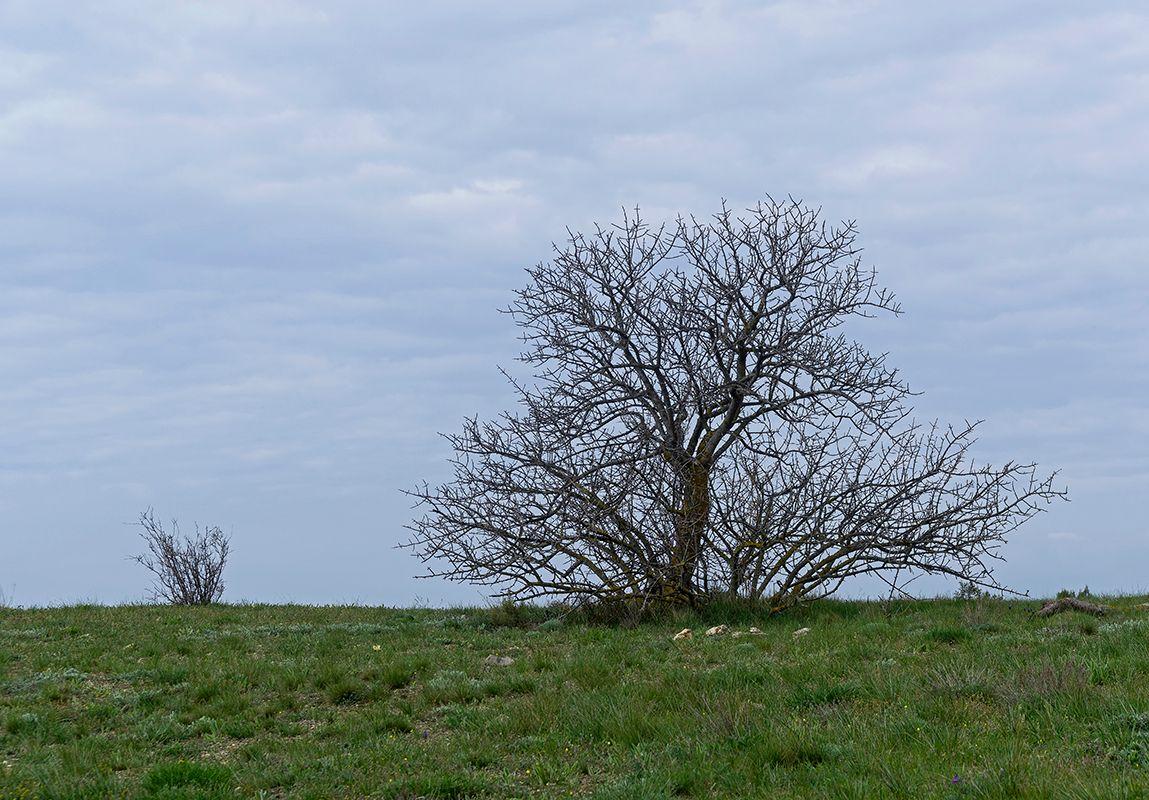 Крым, Судак, мыс Алчак (5). На вершине. Природный минимализм.