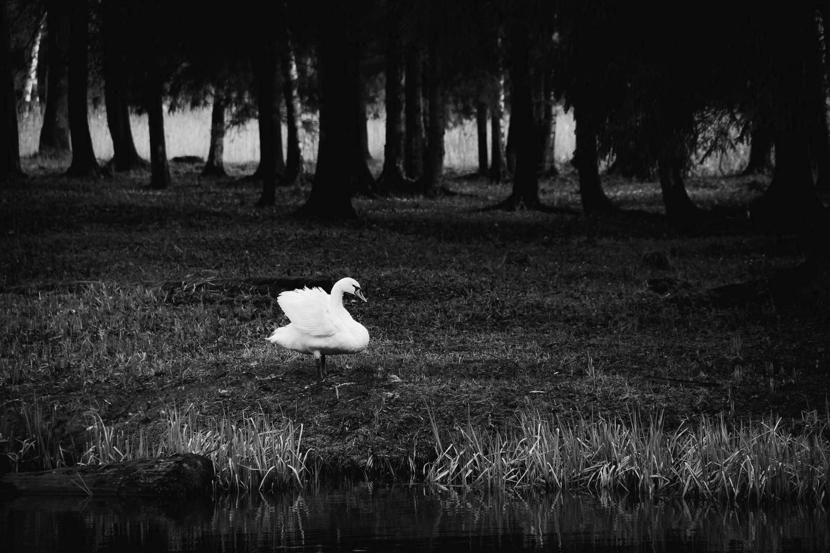 Пятнышко Зеркалка кэнон животные фото фотопрогулка чб черное и белое глубина bw canon animal fineart