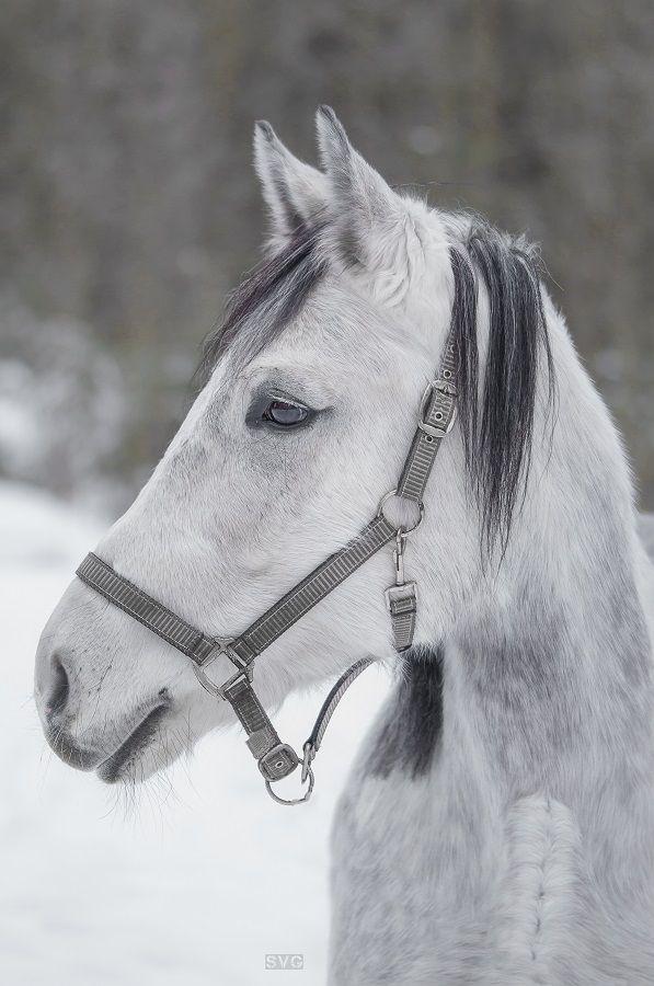 Лошадь по имени Мышка Лошадь