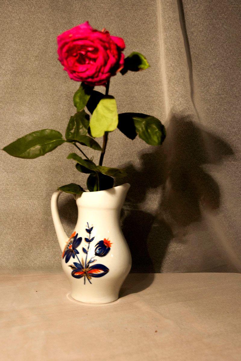 Роза. цветок роза