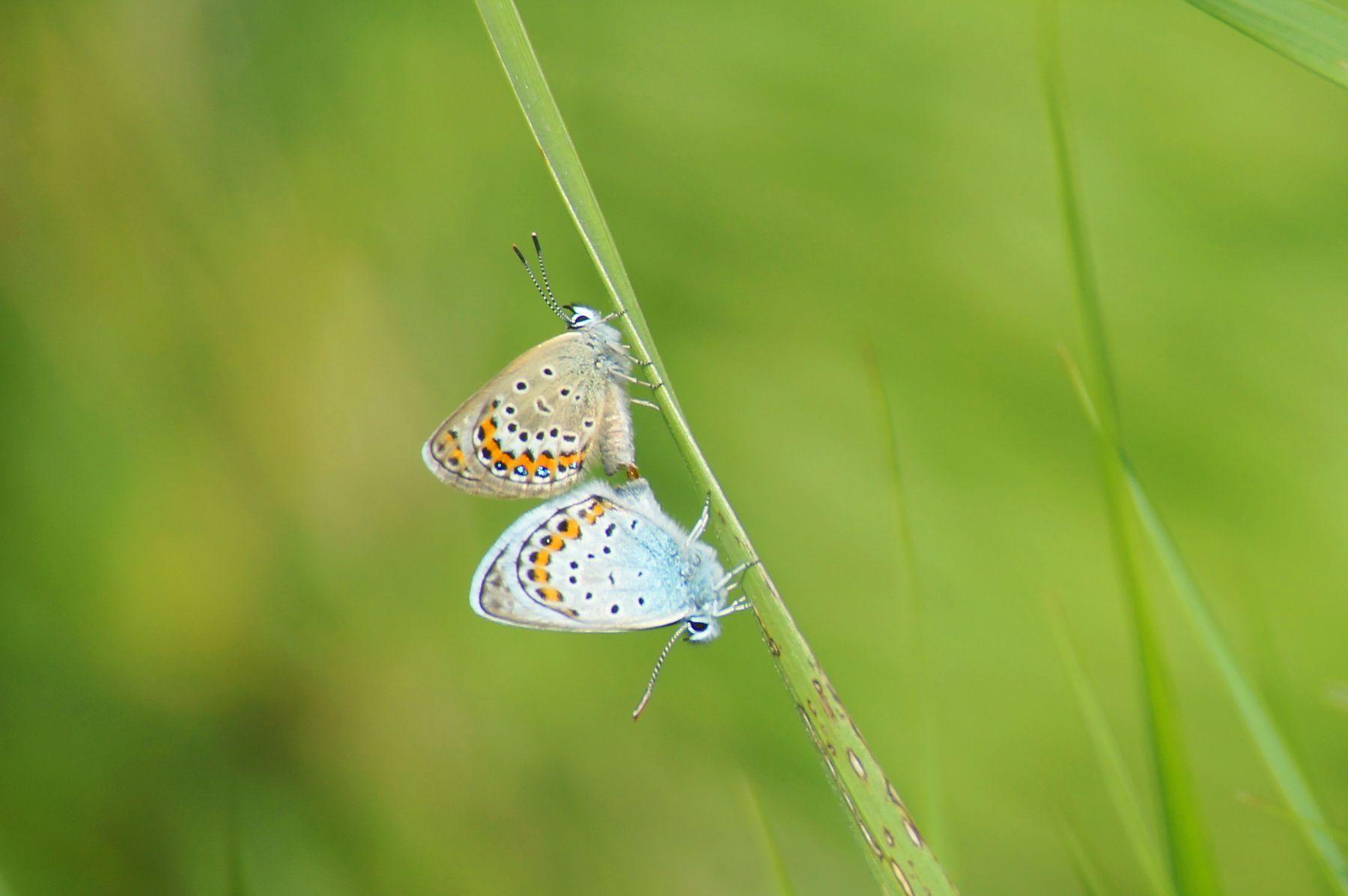 Жизнь продолжается Лето травинка бабочки Волгоград
