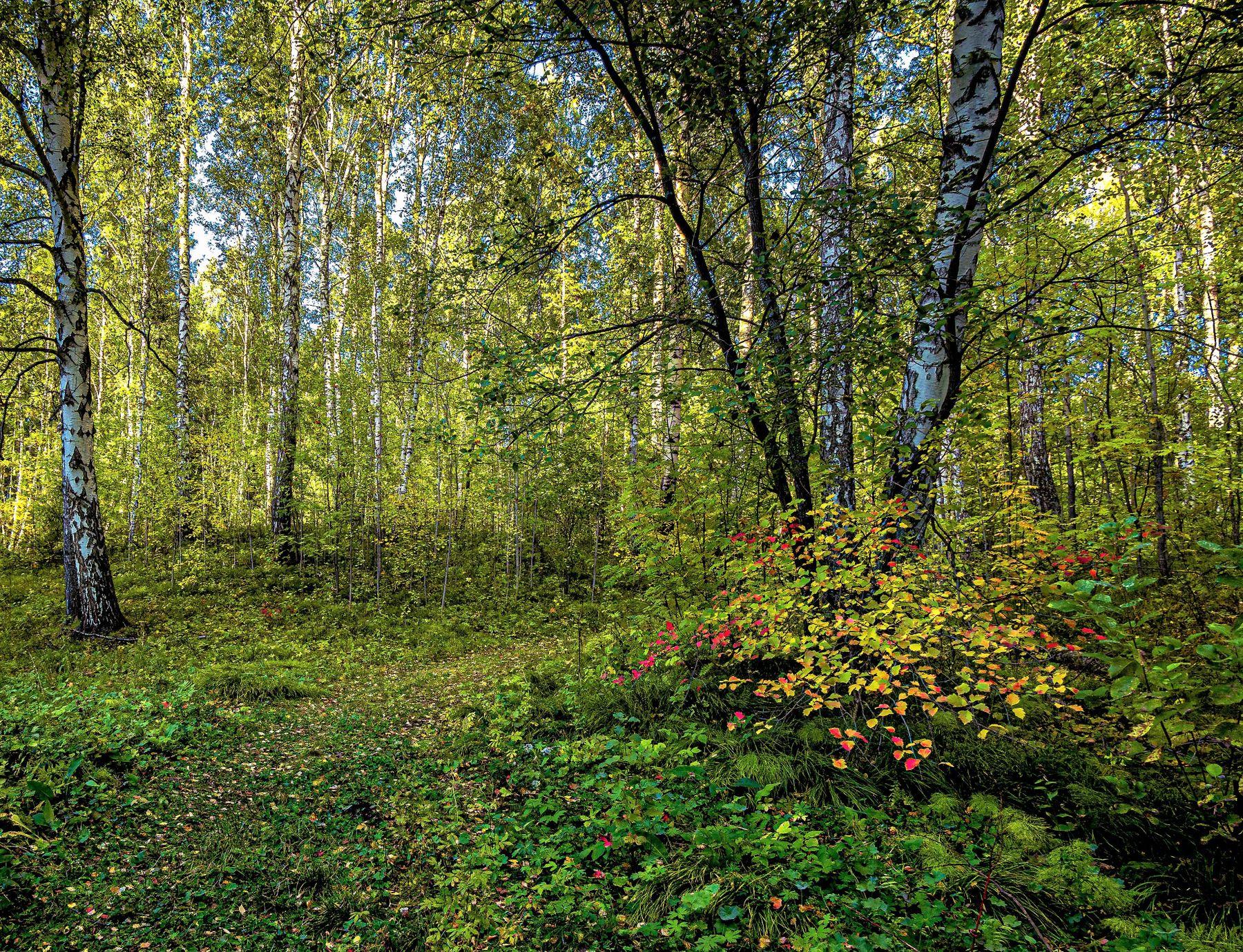 Осень пробует краски Пейзаж лес осень