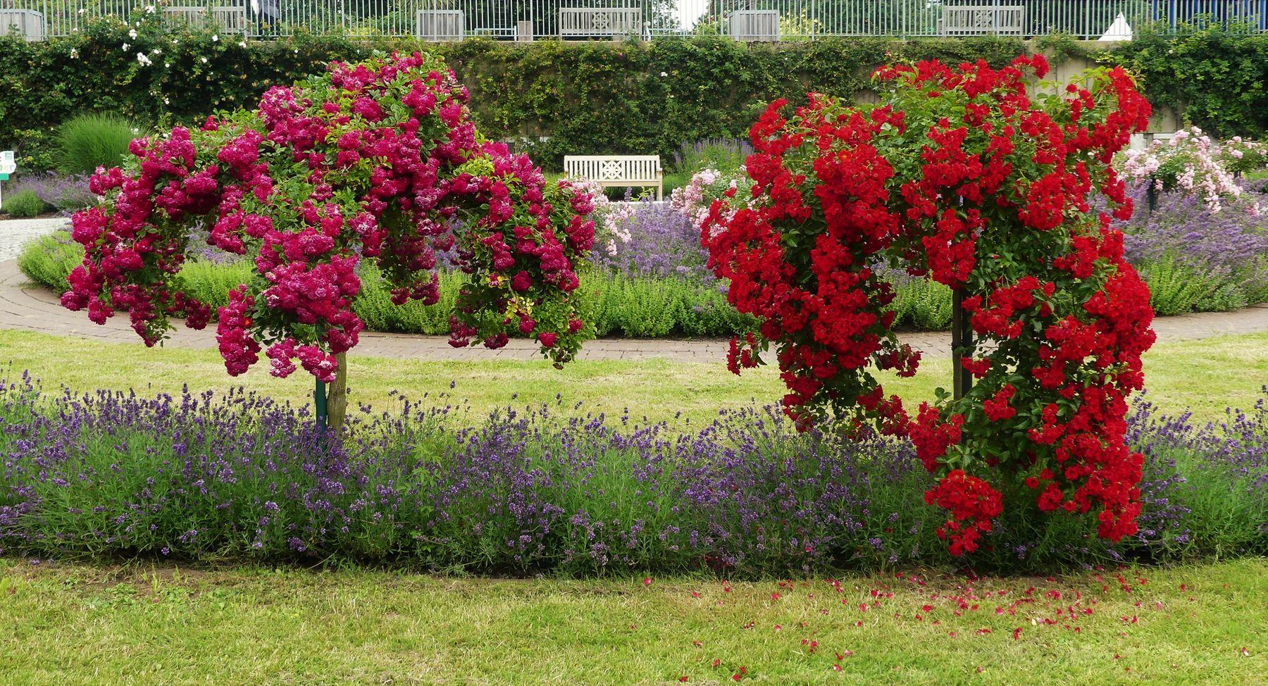 Краски лета Ботанический сад