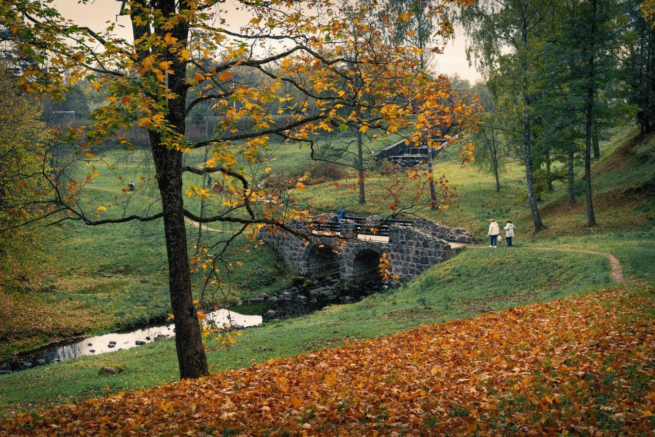 В парке Ораниенбаума петербург ораниенбаум парк осень река мост листва