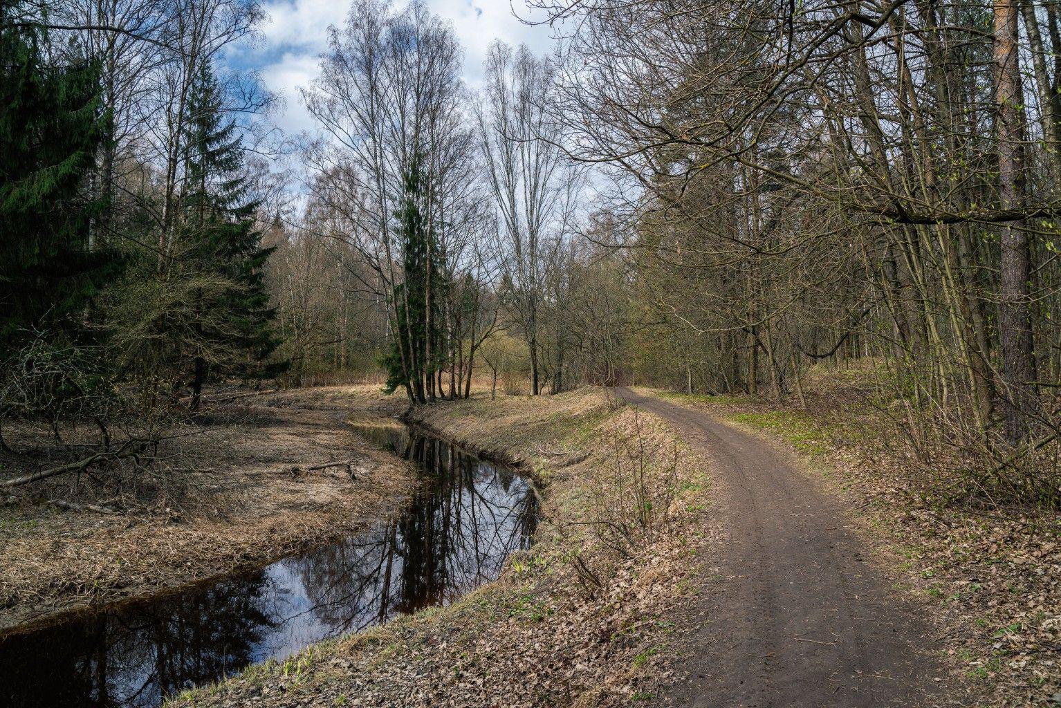 Весной петербург весна невский лесопарк