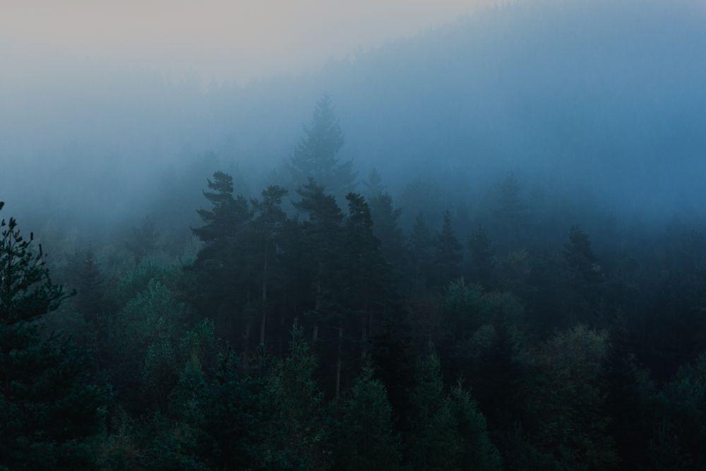 туман лес туман утро пейзаж природа