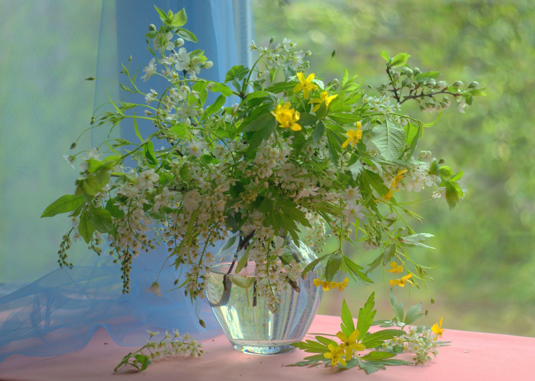 Плывет и манит аромат цветов, весна рисует им свои узоры... весна черемуха цветы