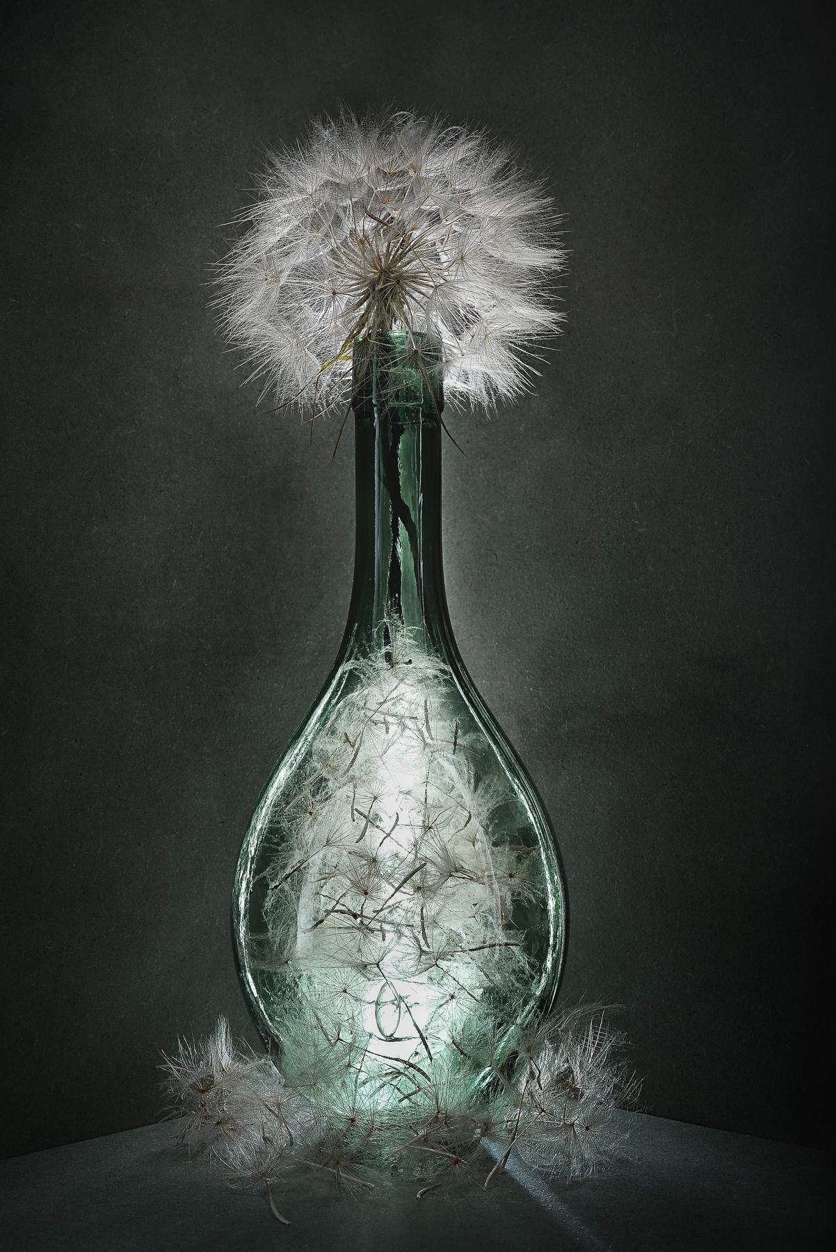 Вино из одуванчиков 1. Натюрморт стекло на просвет одуванчики низкий ключ
