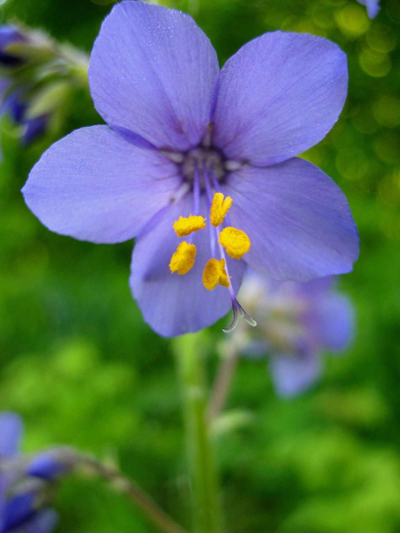 Весна Природа макро путешествия
