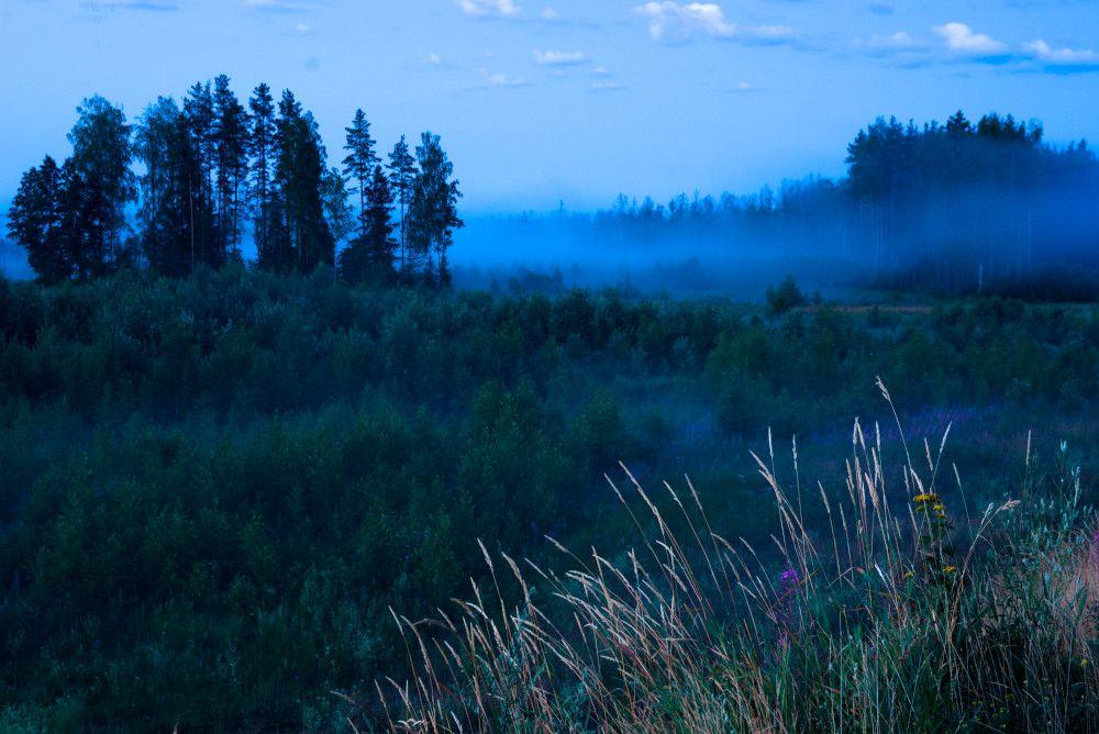 Про синий туман туман ночь