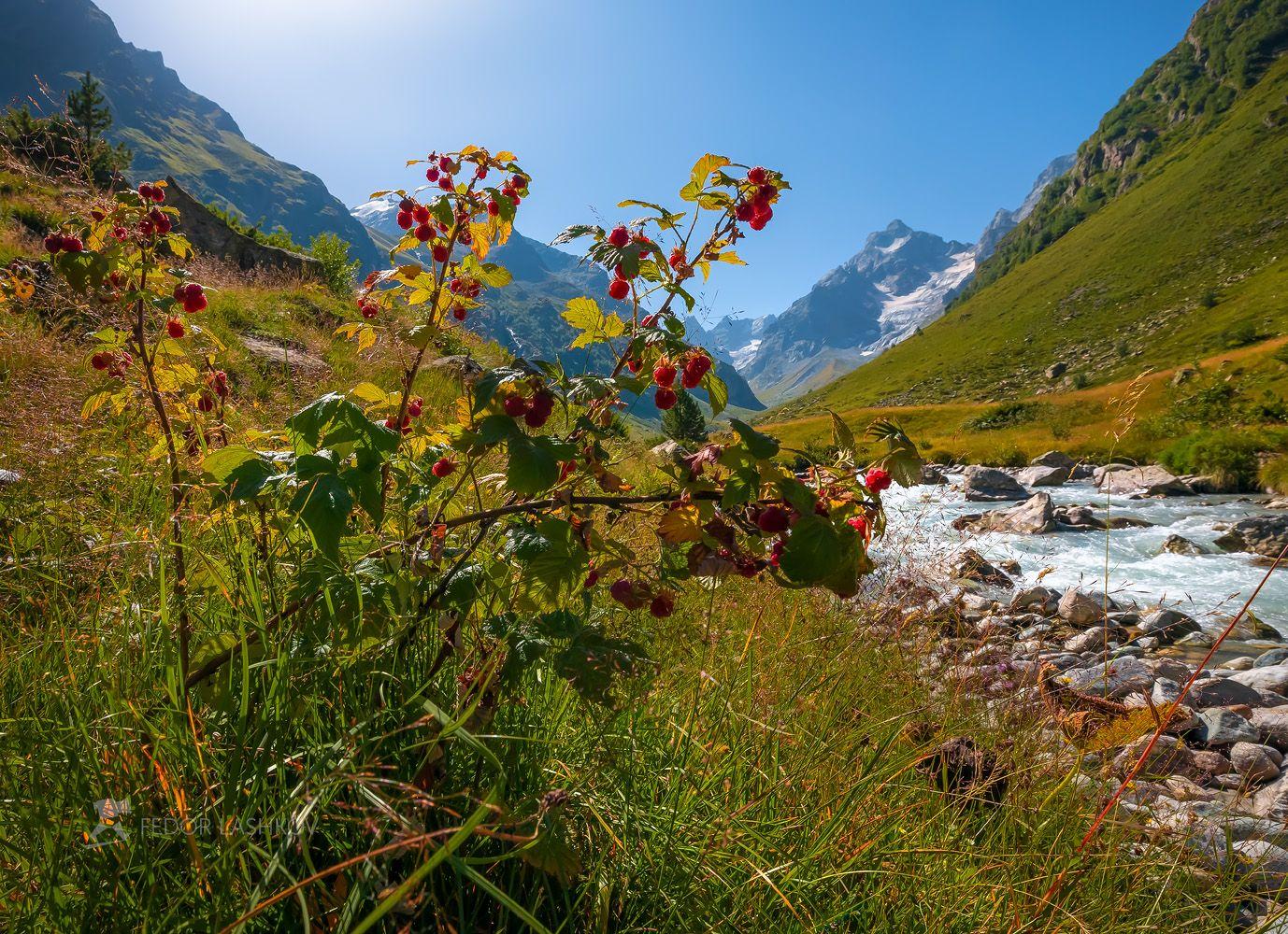 Вкус лета Северный Кавказ макро луг трава лето летнее малина ягода красный зелёный горы вершины горное