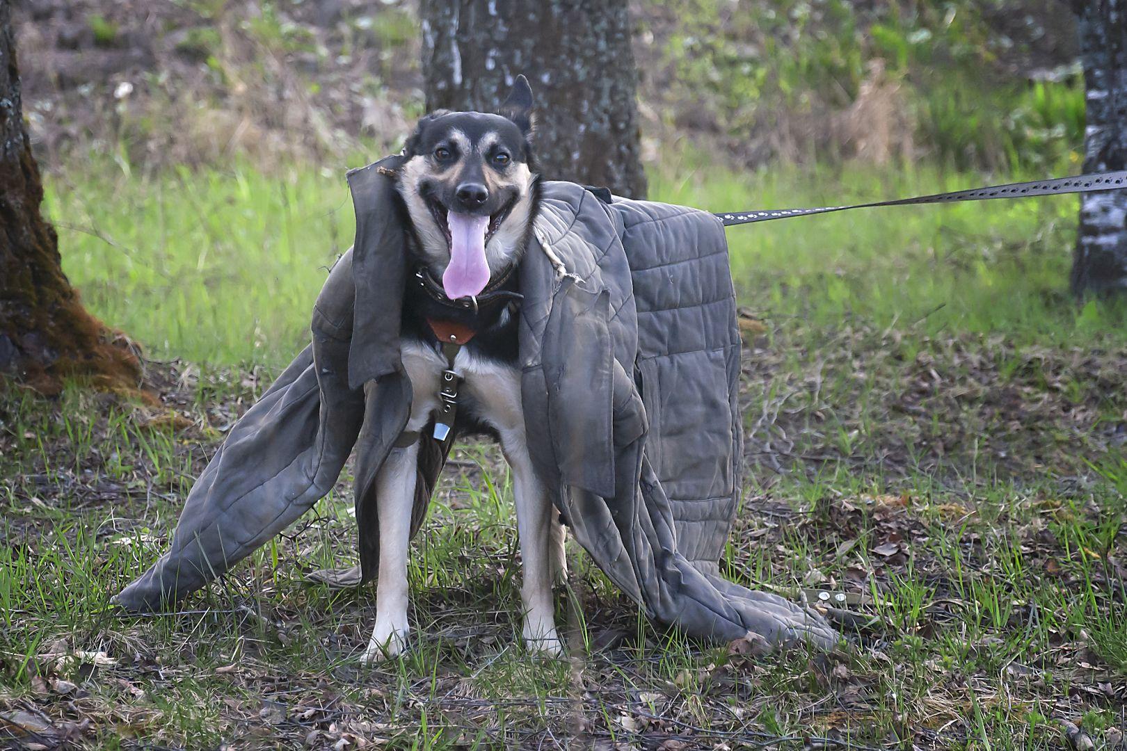 ЗКС (Защитно-караульная служба). ЗКС nikon d3000 собака телогрейка ватник