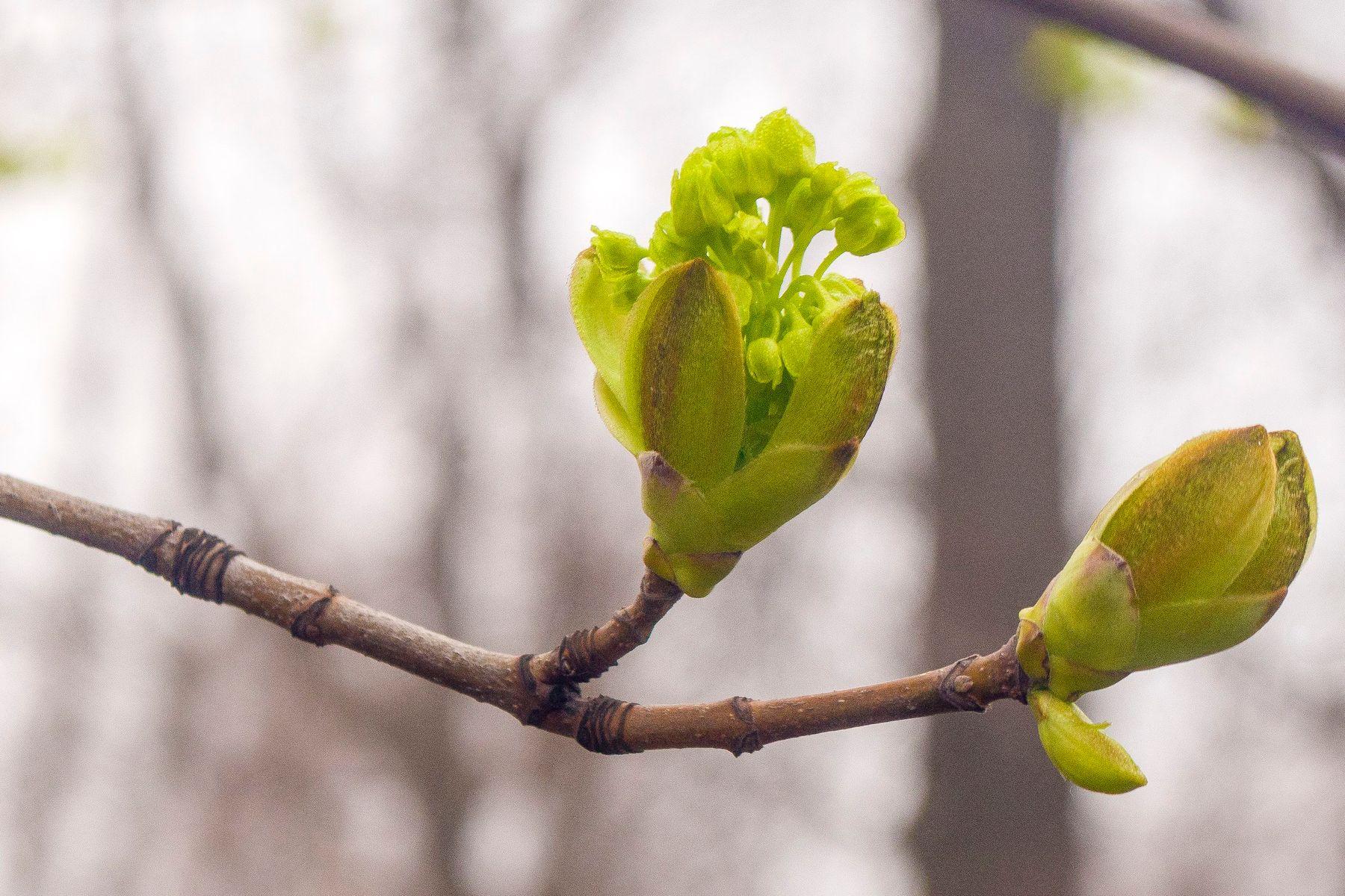 Уже весна. Первые. к.7 Весна