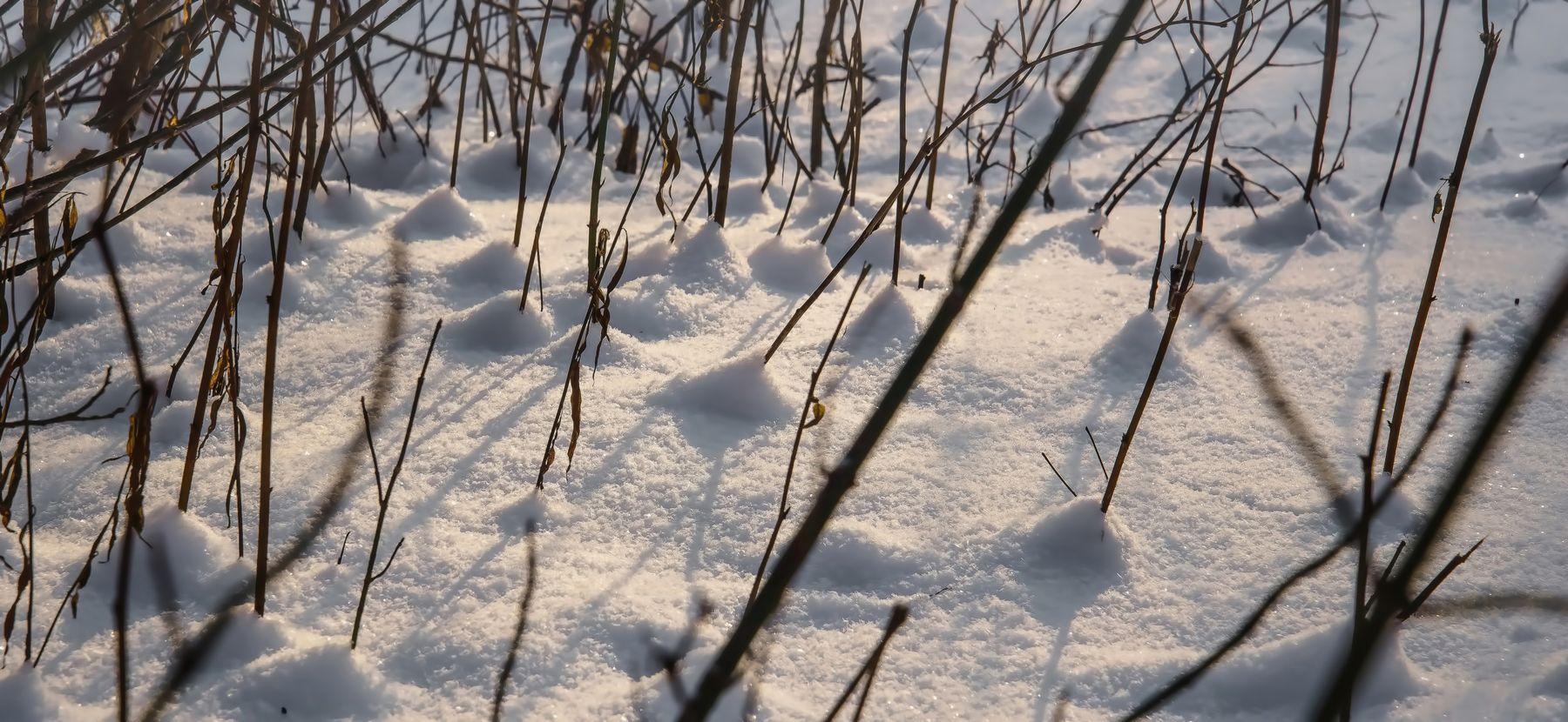 Холмики. зима снег ветки солнце парк