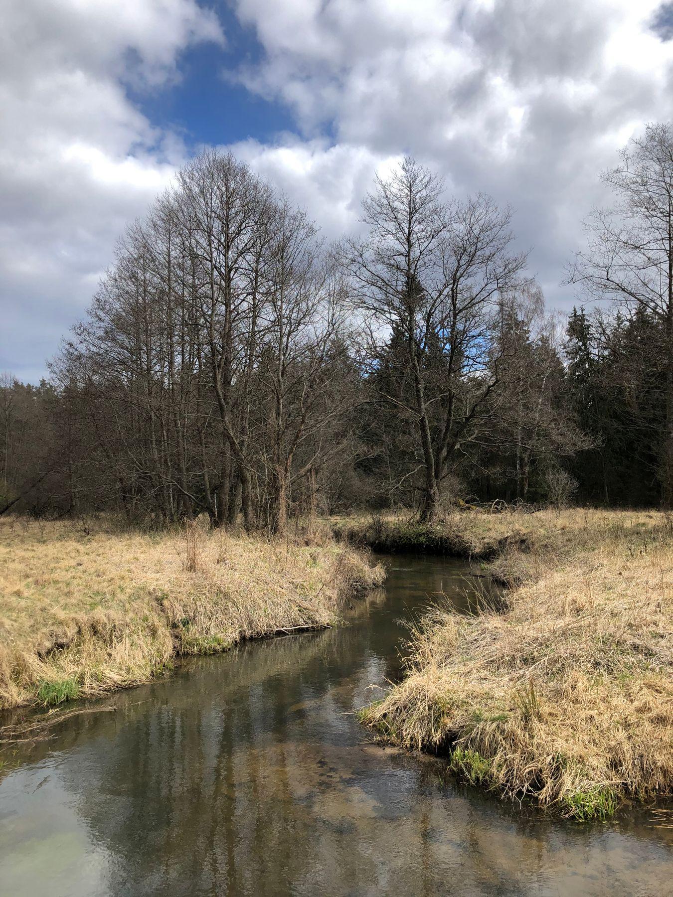 весна река.природа.лес.весна