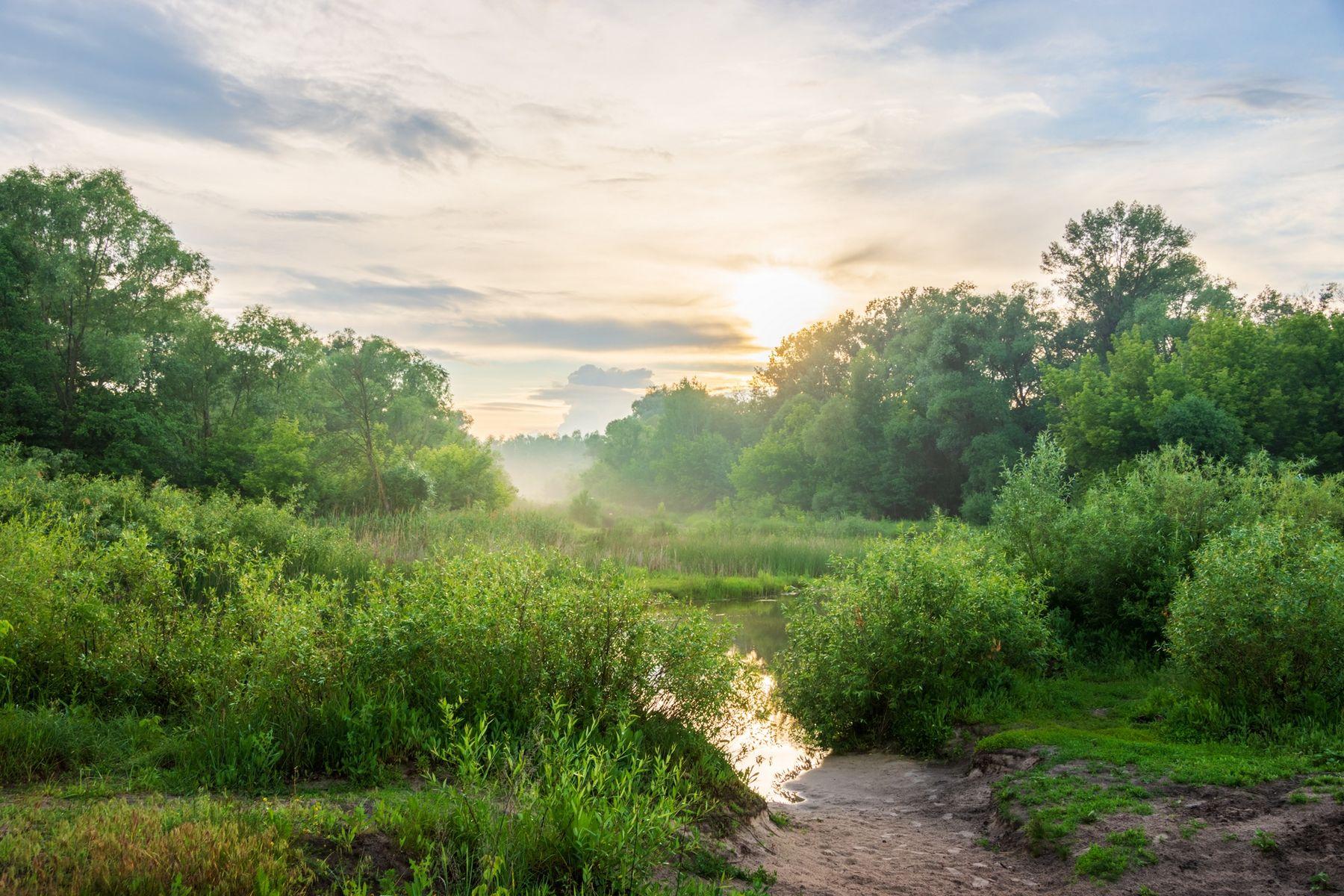 Вечер после дождя лето вечер природа пейзаж дымка солнце река Усманка Воронеж
