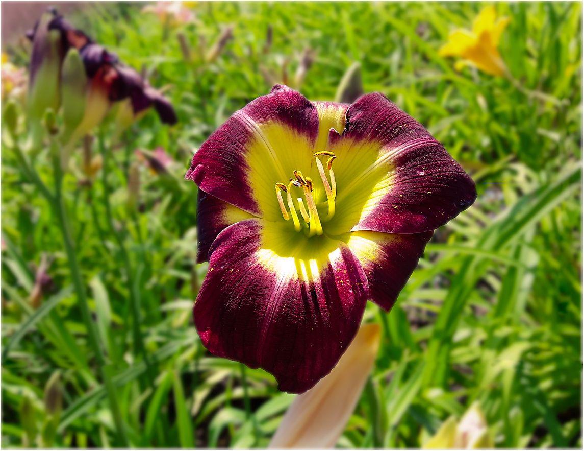WWW флора лето цветы