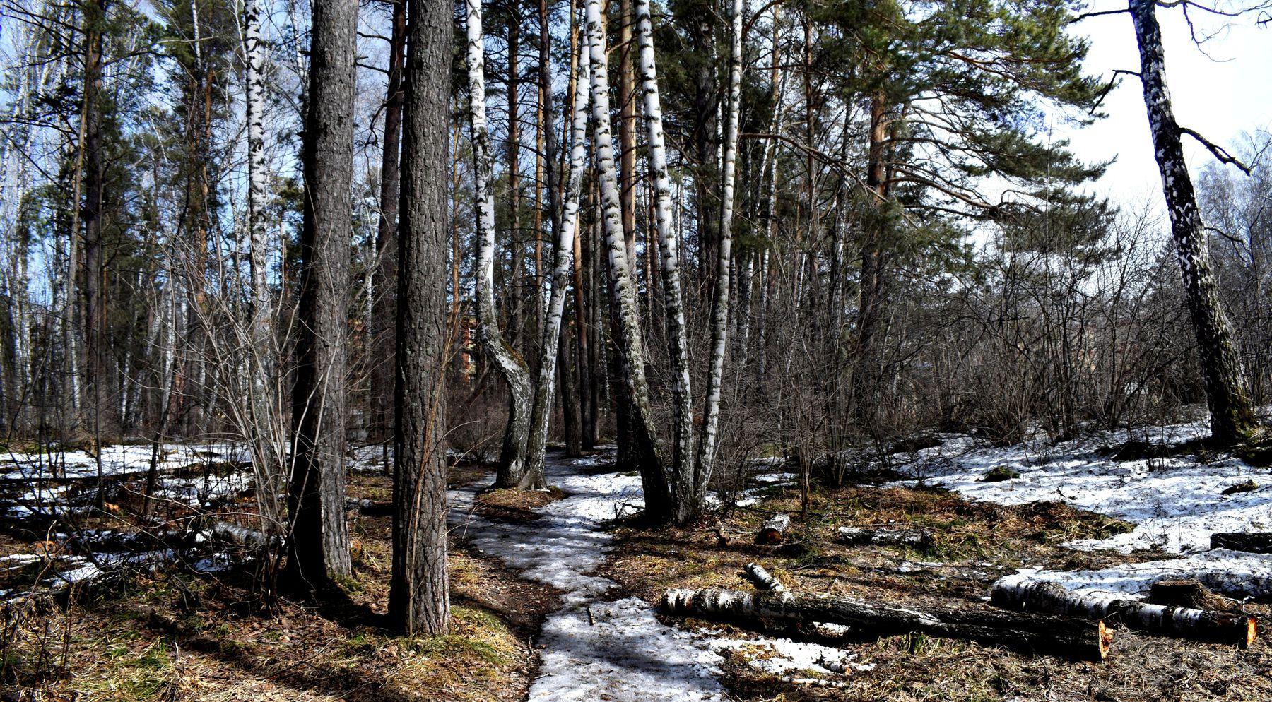 Апрельский лес. весна лесной пейзаж