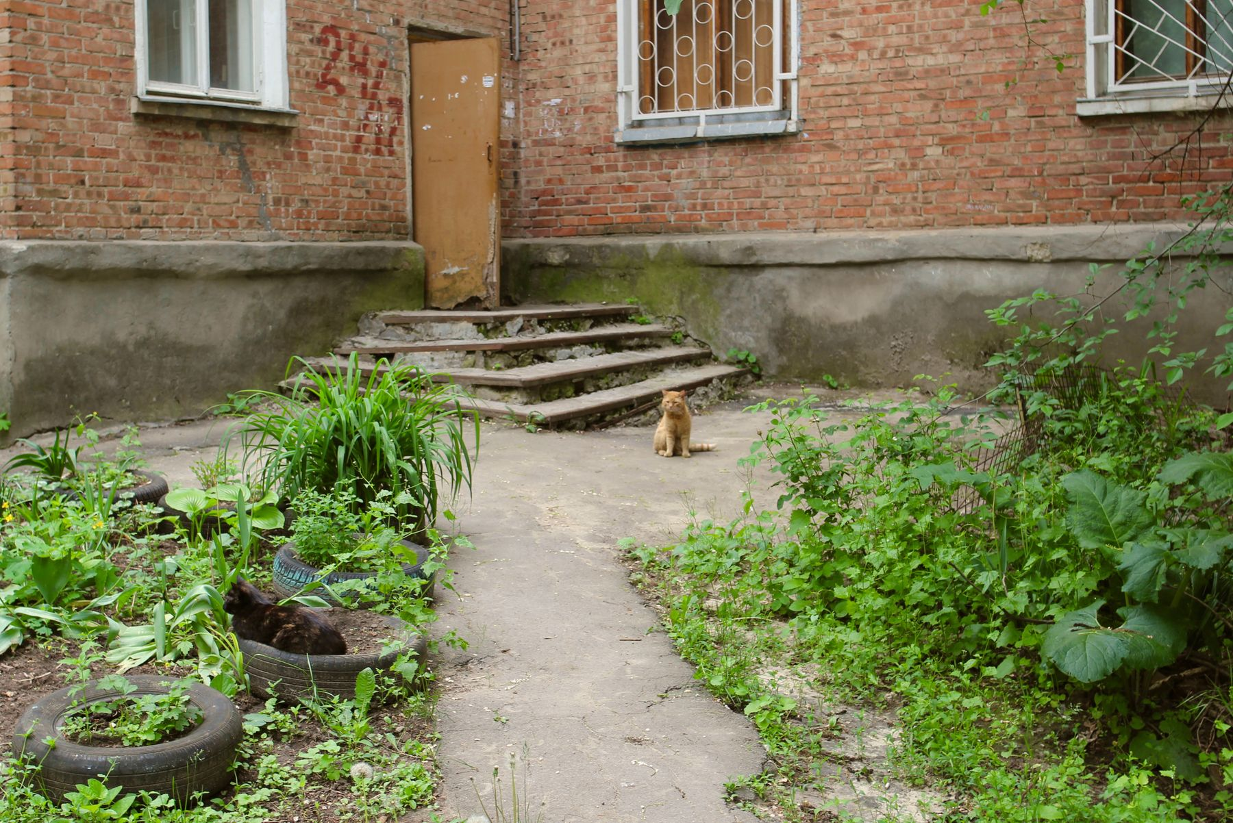 Кошкин двор