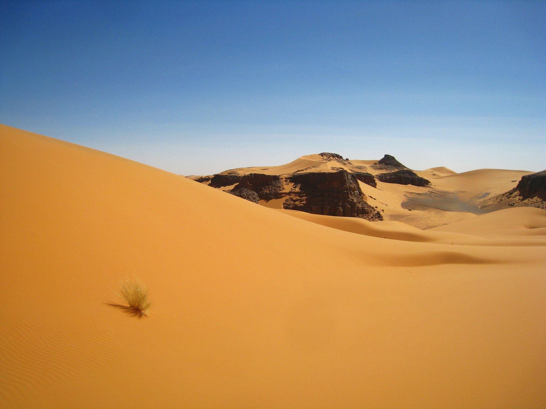 Травка, нагорье Тадрат, Сахара. Алжир пейзаж скалы