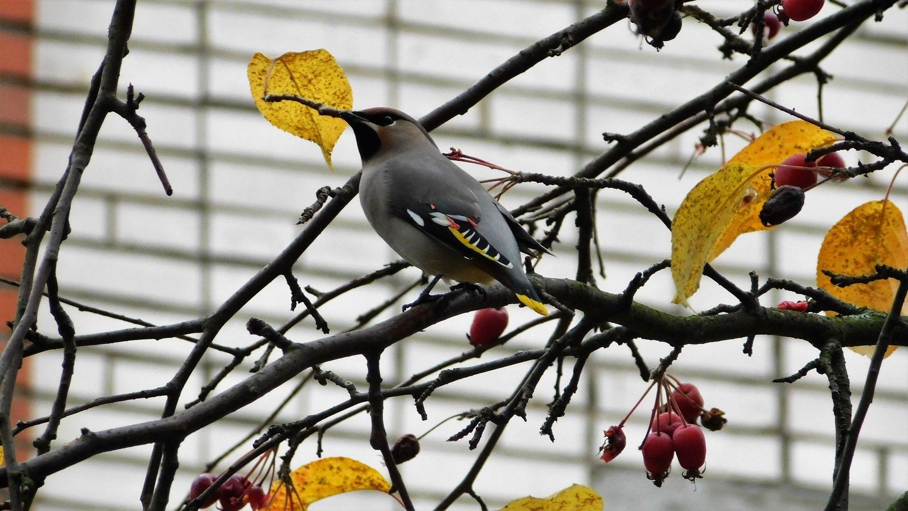 Осень птицы осень