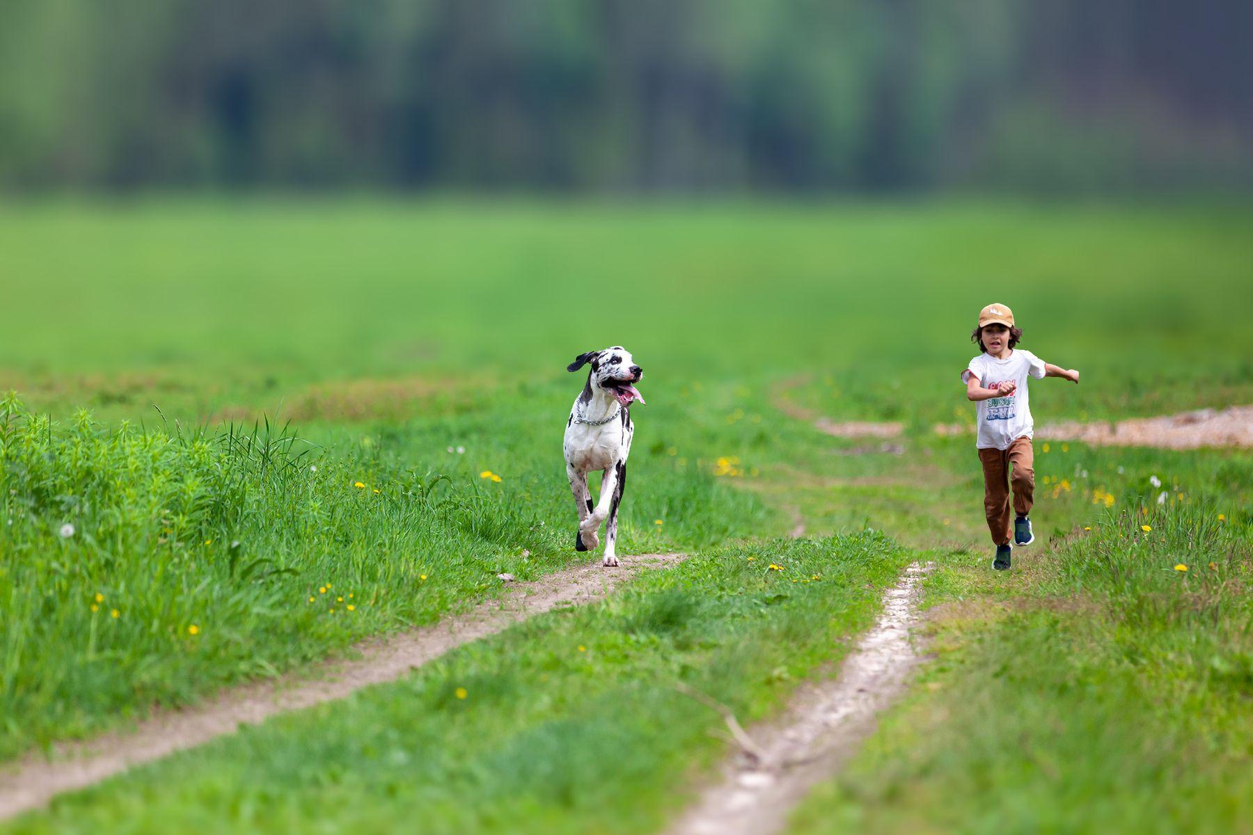 Искушение сдаться будет особенно сильным незадолго до победы немецкий дог great dane мальчик собака наперегонки кто быстрее