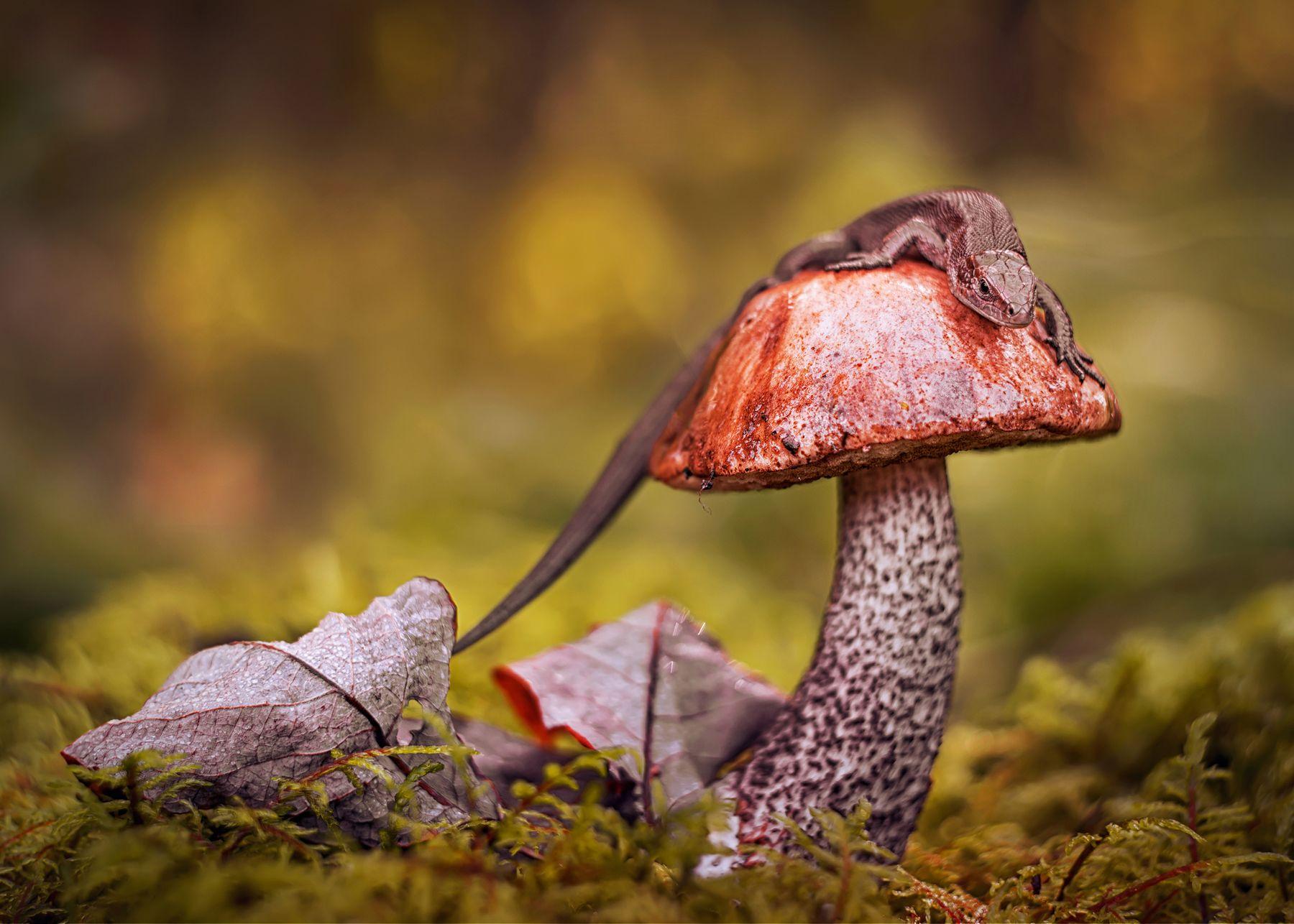 наблюдательный пункт ящерица природа лес макро гриб лист