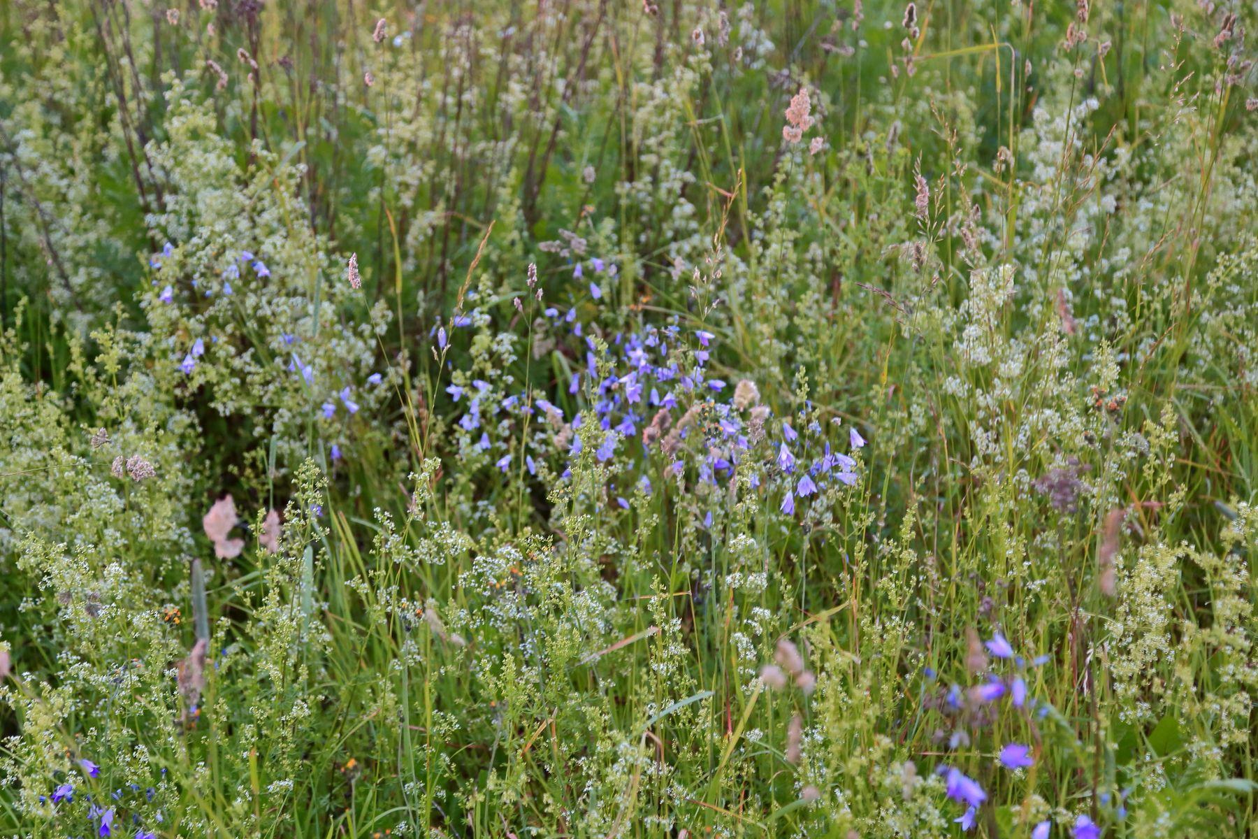 Полевые цветы лето поле цветы закат