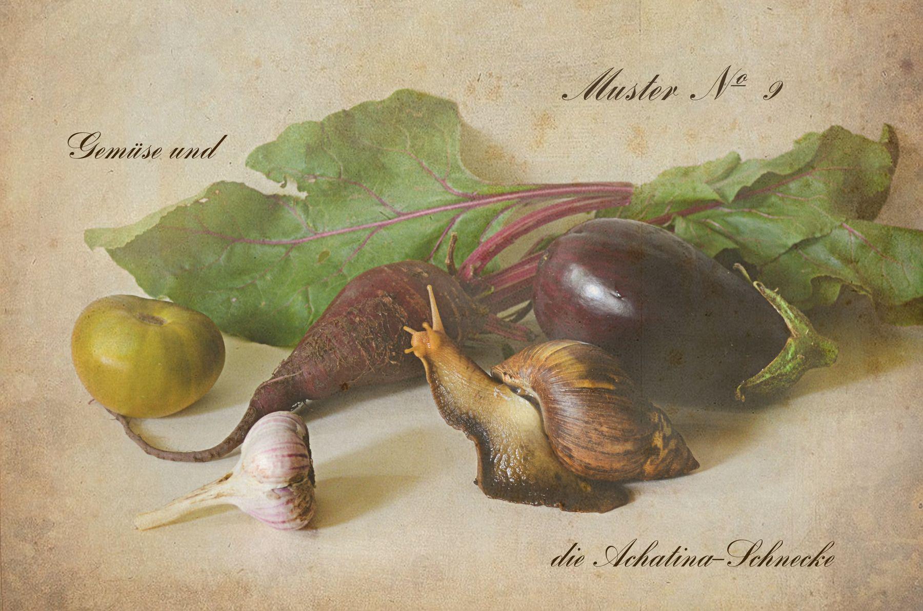 Ботанический альбом. Овощи и улитка Ахатина. натюрморт ботанический альбом овощи чеснок свекла баклажан улитка Ахатина